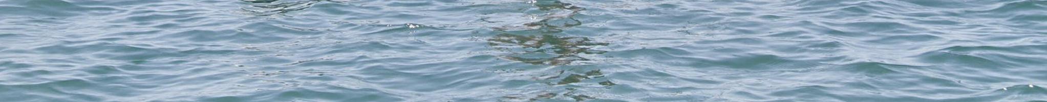 Pranchas Aquáticas